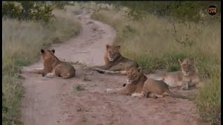 Download Pt 1 Safari Live's Sunrise Safari Drive at 6:00 AM on April 26, 2018 ( Nkuhumas ) Video