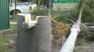 Download Tongue and Groove Tree Felling Technique Video