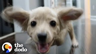Download Gracie the Two-Legged Dog Gets a Wheelchair Made of LEGOs | The Dodo Video