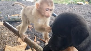 Download Baby Monkey Meets Cute Dog - Very Funny And Very Very Cute Video