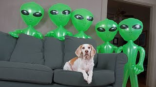 Download Dog Unimpressed by Alien Invasion: Funny Dog Maymo Video