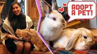 Download Hedgehog, Bunny & Cat Cafes from Japan! National Adopt A Pet Day! Video