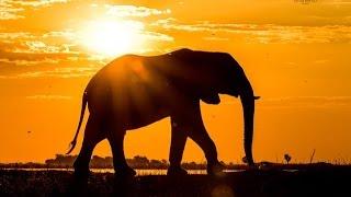 Download Pangolin Photo Safaris Video