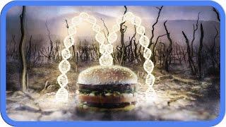 Download Die Wahrheit über McDonald's Video