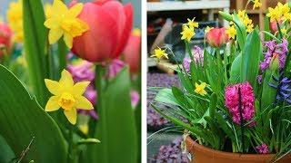 Download How to Layer Spring Flowering Bulbs (Lasagna Planting): Spring Garden Guide Video