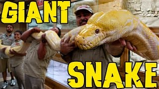 Download Measuring GIANT Snakes Video
