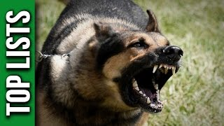 Download 5 Most Dangerous Dog Breeds Video