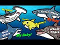 Download Who's Baby Shark's Mommy?   Sea Animals for Kids   Great White Shark, Whale Shark, Hammerhead Shark Video