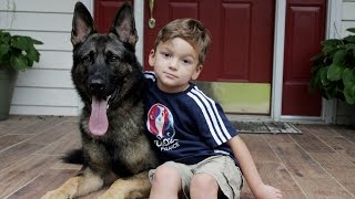 Download Loyal German Shepherd Helps Family With The Chores: SUPERPOWER DOGS Video