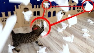 Download 🐈👻Kitten ATTACK on Ghost Town in Real Life. Video