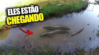 Download ESTE PEIXE CAUSA PROBLEMAS NO MUNDO INTEIRO ! Video
