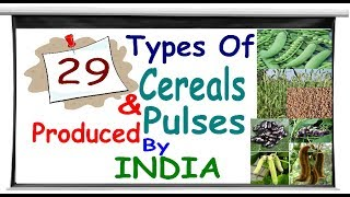 Download 29 types of cereals and pulses which produce by India Video