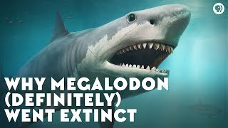Download Why Megalodon (Definitely) Went Extinct Video