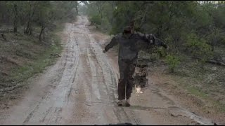 Download Safari Live : Brent so happy for the rain he jumps for joy in a mud puddle Dec 11, 2016 Video