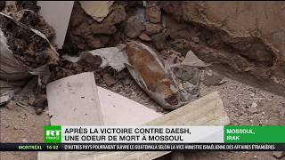 Download Cadavres, bombes n'ayant pas explosé et «odeur de mort» à Mossoul, reportage de RT Video
