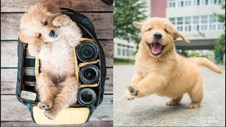 Download Cutest Dogs - ♥Cute Puppies Doing Funny Things 2019♥ #1 Video