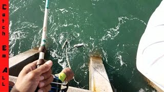 Download BEST PIER ON EARTH: How to CATCH EVERYTHING part1 Video