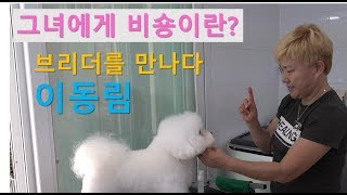 Download [브리더를 만나다] 비숑프리제 - 이동림 1편, '그녀에게 비숑이란?'   Introducing Bichon frise breeder. Video