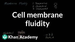 Download Cell membrane fluidity | Cells | MCAT | Khan Academy Video