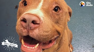 Download Guy On Road Trip Meets A Homeless Pit Bull | The Dodo Pittie Nation Video