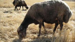 Download davut balpınar gıresor köyü Video