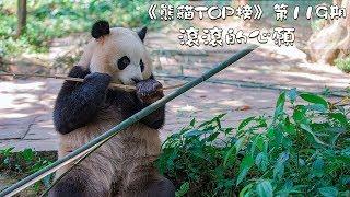 Download 《熊貓TOP榜》第119期 滾滾的心願   iPanda熊貓頻道 Video