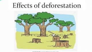 Download Deforestation`s causes and effects Video