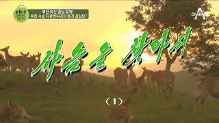 Download 앗! 북한에 이런 일이? 북한 사슴 다큐멘터리의 충격 결말은? l 이제 만나러 갑니다 370회 Video