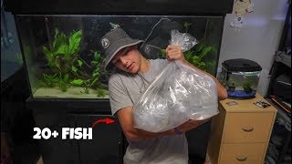 Download ALL the NEW FISH ARRIVED!!! Video