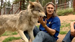 Download Dr. Jeff Treats a Curious Wolfpack Video