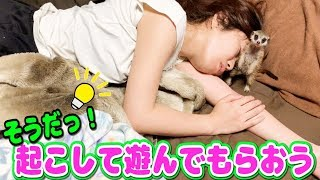 Download ミーアキャットの赤ちゃんがなかなか寝てくれない件 Video