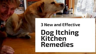 Download 3 'New' and 'Effective' Dog Itching Kitchen Remedies Video