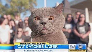 Download The Cat Who Caught the Laser Video