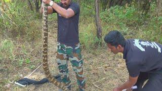 Download क्या अजगर सांप आदमी को निगल सकता है..? | Snake Released into the forest from Ahmednagar Video