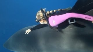 Download Shark Whisperer: Woman Swims With Great Whites in Perfect Harmony Video