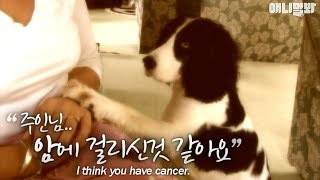 Download ″Sir, I think you have cancer″ a dog diagnoses a person's cancer? Video