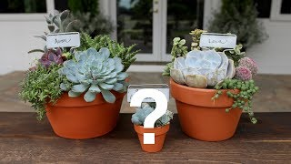 Download Succulents and a Special Announcement // Garden Answer Video