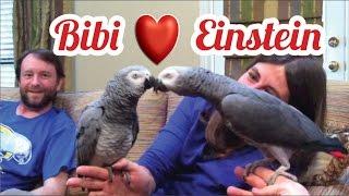 Download Einstein the Parrot meets Bibi the Bird Video