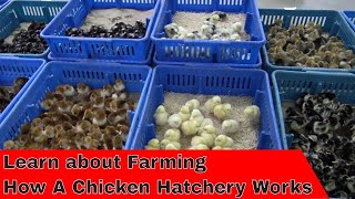 Download Tour How a Hatchery Works Video