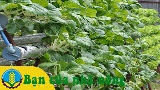 Download Mô hình và Kỹ thuật trồng rau sạch không cần đất Video