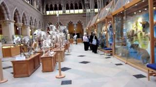 Download Museum of Natural History, Oxford University Video