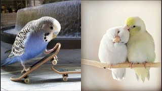 Download Cute Parrots Videos Compilation cute moment of the animals - Soo Cute! #4 Video