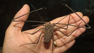 Download 11 Frightening Animals that are SHOCKINGLY Harmless! Video