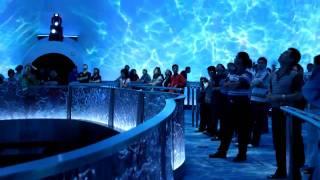 Download City of Dreams Macau - Dragon's Treasure - Falcon's Treehouse Attraction Design Services Video