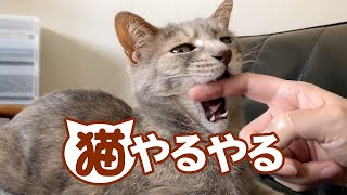 Download 猫やるやる - Typical Cat Owner - Video