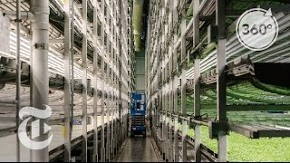 Download A Vertical Farm Grows In Newark | The Daily 360 | The New York Times Video