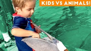 Download The Funniest Pets Vs Kids & Babies Fail Compilation | Funny Pet Videos Video