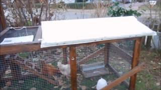 Download Vogelgrippe - Stallpflicht für unsere Hühner Video