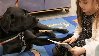 Download Inside California Education: Service Dog in the Classroom Video