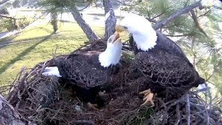 Download SWFL Eagles ~ Remembering Ozzie ~ 09·29·16 Video